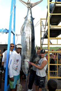 Marlin bleu de 489lb pris à la traine