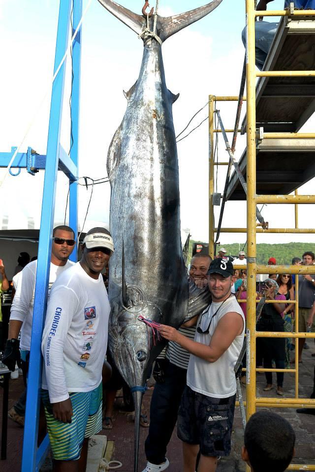Marlin bleu pris en concours à Antigua