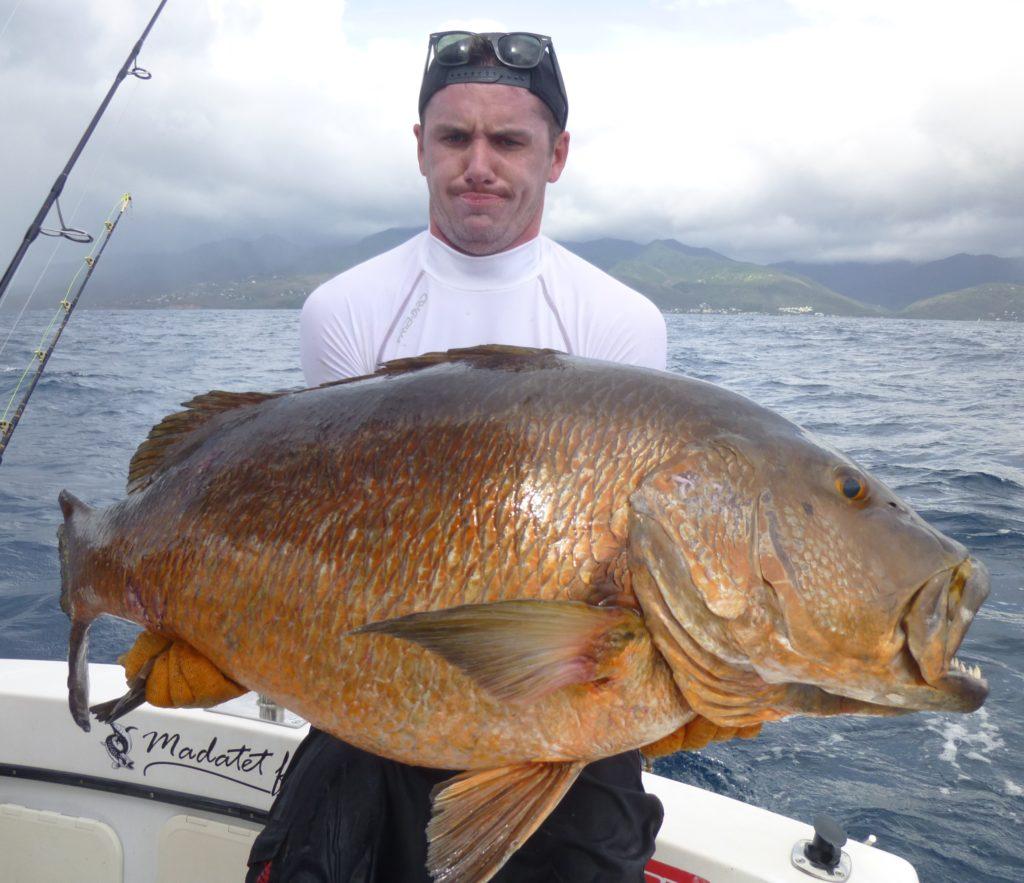 Pêche du Pagre dispo en Guadeloupe